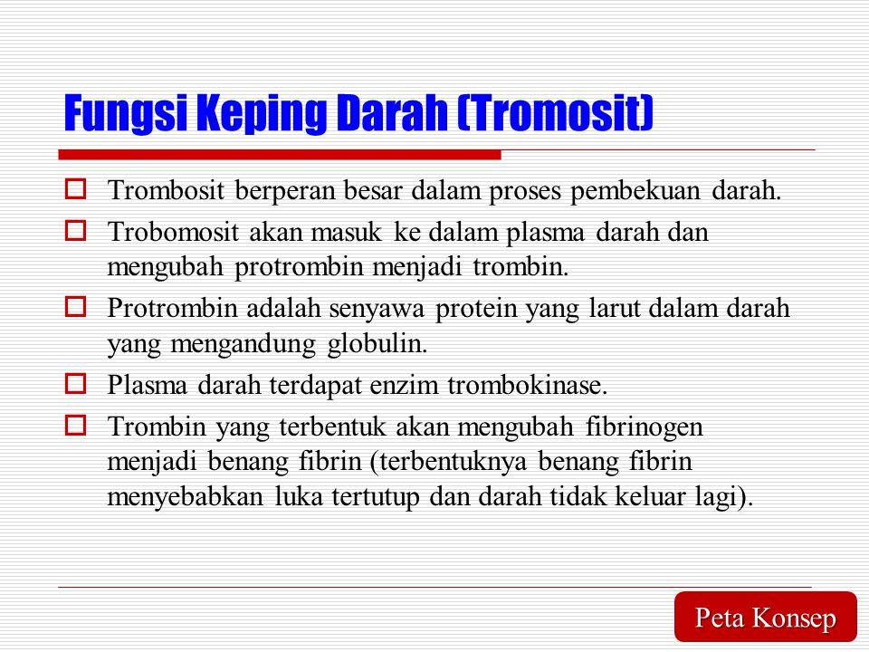 Fungsi Keping Darah (Tromosit)  Trombosit berperan besar dalam proses pembekuan darah.  Trobomosit akan masuk ke dalam plasma darah dan mengubah pro