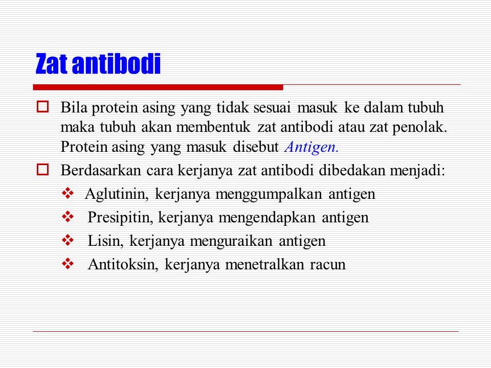 Zat antibodi  Bila protein asing yang tidak sesuai masuk ke dalam tubuh maka tubuh akan membentuk zat antibodi atau zat penolak. Protein asing yang m