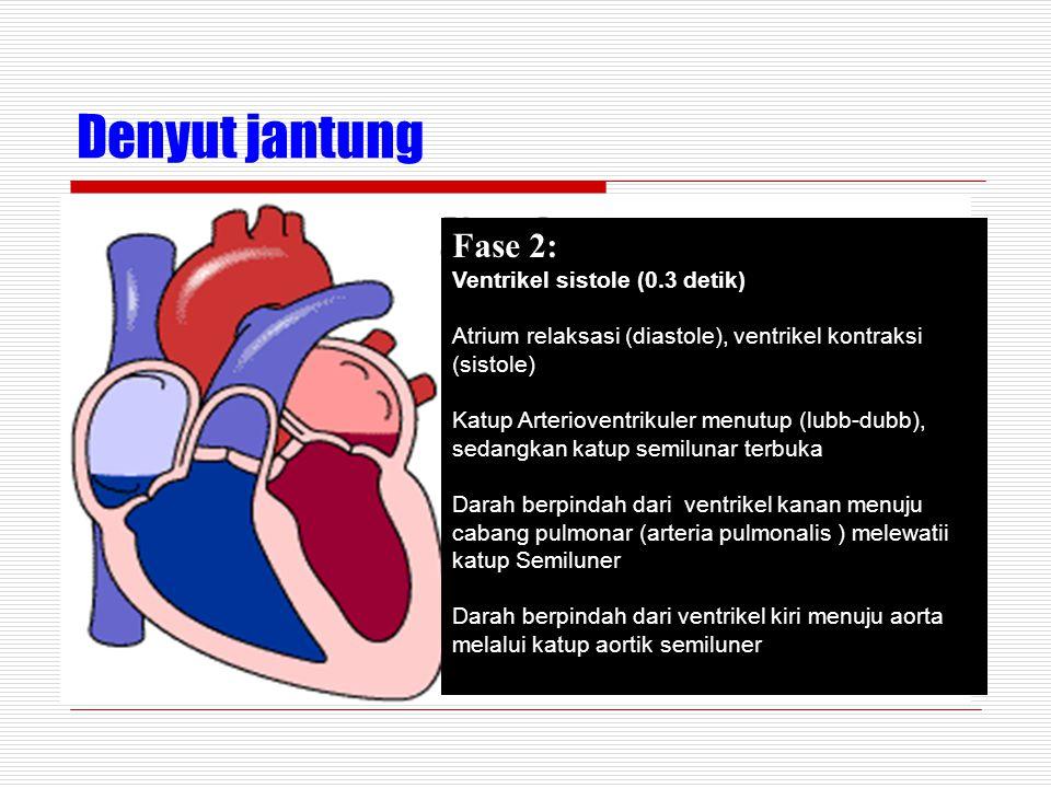 Denyut jantung Fase 2: Ventrikel sistole (0.3 detik) Atrium relaksasi (diastole), ventrikel kontraksi (sistole) Katup Arterioventrikuler menutup (lubb-dubb), sedangkan katup semilunar terbuka Darah berpindah dari ventrikel kanan menuju cabang pulmonar (arteria pulmonalis ) melewatii katup Semiluner Darah berpindah dari ventrikel kiri menuju aorta melalui katup aortik semiluner