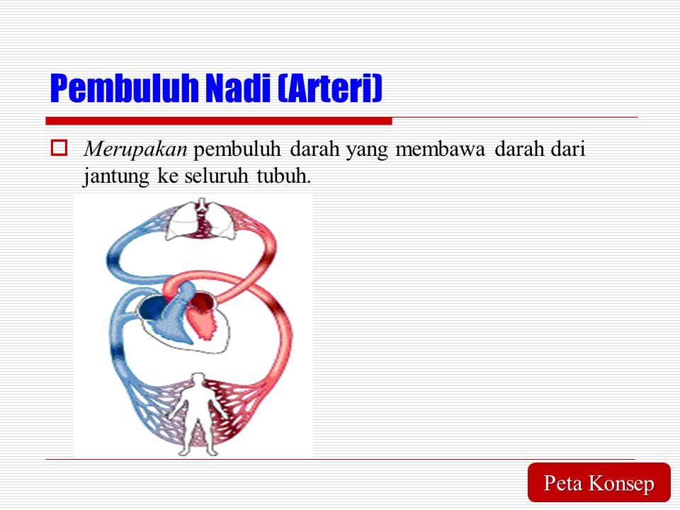 Pembuluh Nadi (Arteri)  Merupakan pembuluh darah yang membawa darah dari jantung ke seluruh tubuh. Peta Konsep Peta Konsep