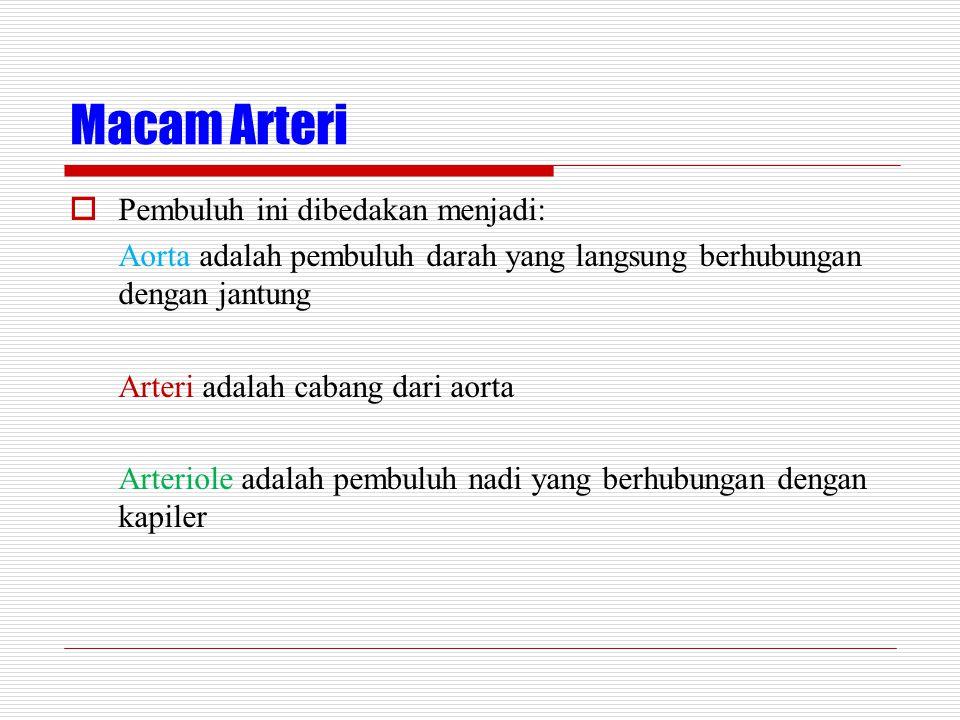 Macam Arteri  Pembuluh ini dibedakan menjadi: Aorta adalah pembuluh darah yang langsung berhubungan dengan jantung Arteri adalah cabang dari aorta Arteriole adalah pembuluh nadi yang berhubungan dengan kapiler