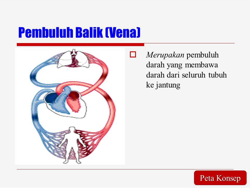 Pembuluh Balik (Vena)  Merupakan pembuluh darah yang membawa darah dari seluruh tubuh ke jantung Peta Konsep Peta Konsep