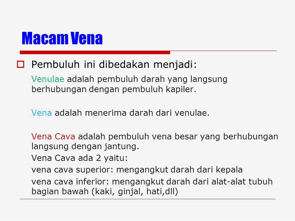 Macam Vena  Pembuluh ini dibedakan menjadi: Venulae adalah pembuluh darah yang langsung berhubungan dengan pembuluh kapiler. Vena adalah menerima dar