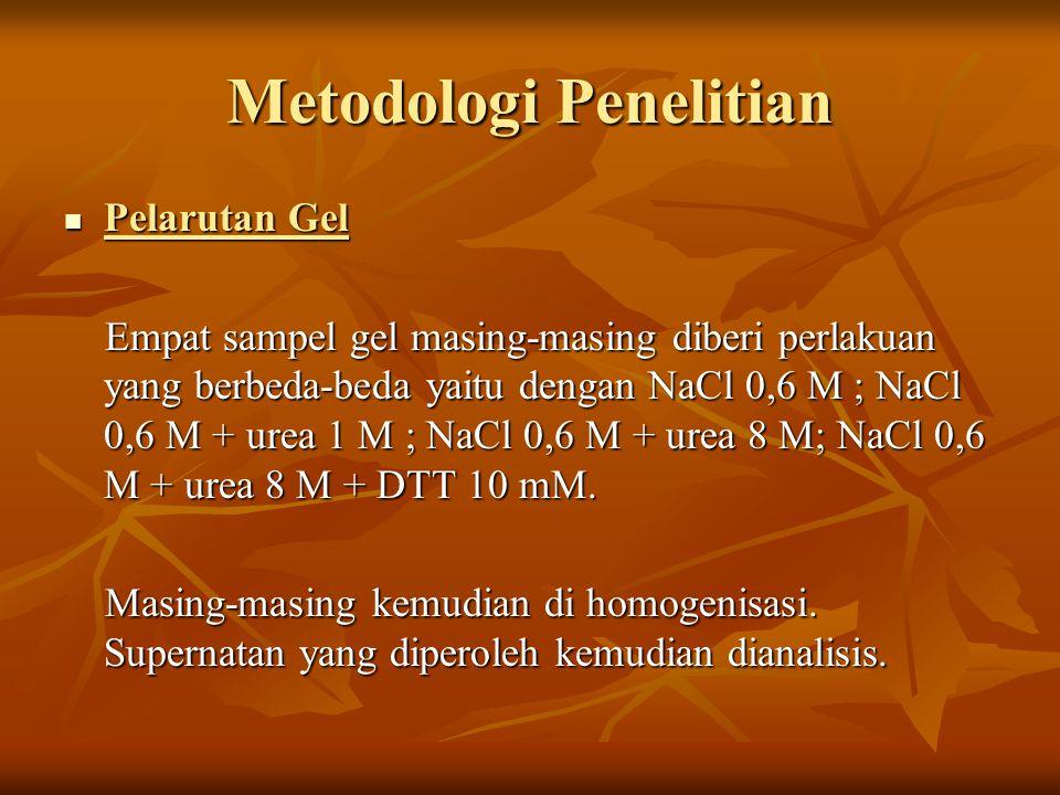 Metodologi Penelitian Pelarutan Gel Pelarutan Gel Empat sampel gel masing-masing diberi perlakuan yang berbeda-beda yaitu dengan NaCl 0,6 M ; NaCl 0,6