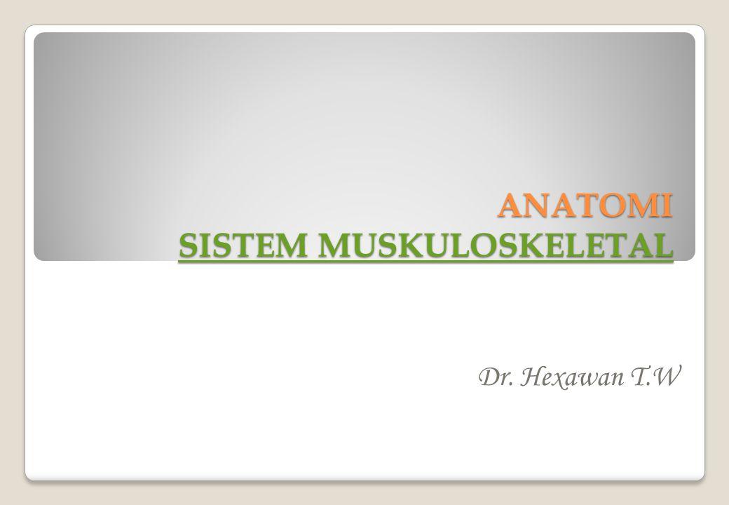 ANATOMI SISTEM MUSKULOSKELETAL SISTEM MUSKULOSKELETAL SISTEM MUSKULOSKELETAL Dr. Hexawan T.W
