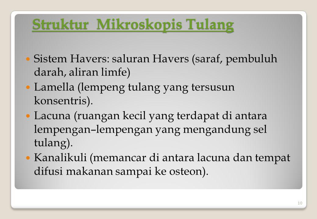 Struktur Mikroskopis Tulang Struktur Mikroskopis Tulang Sistem Havers: saluran Havers (saraf, pembuluh darah, aliran limfe) Lamella (lempeng tulang ya