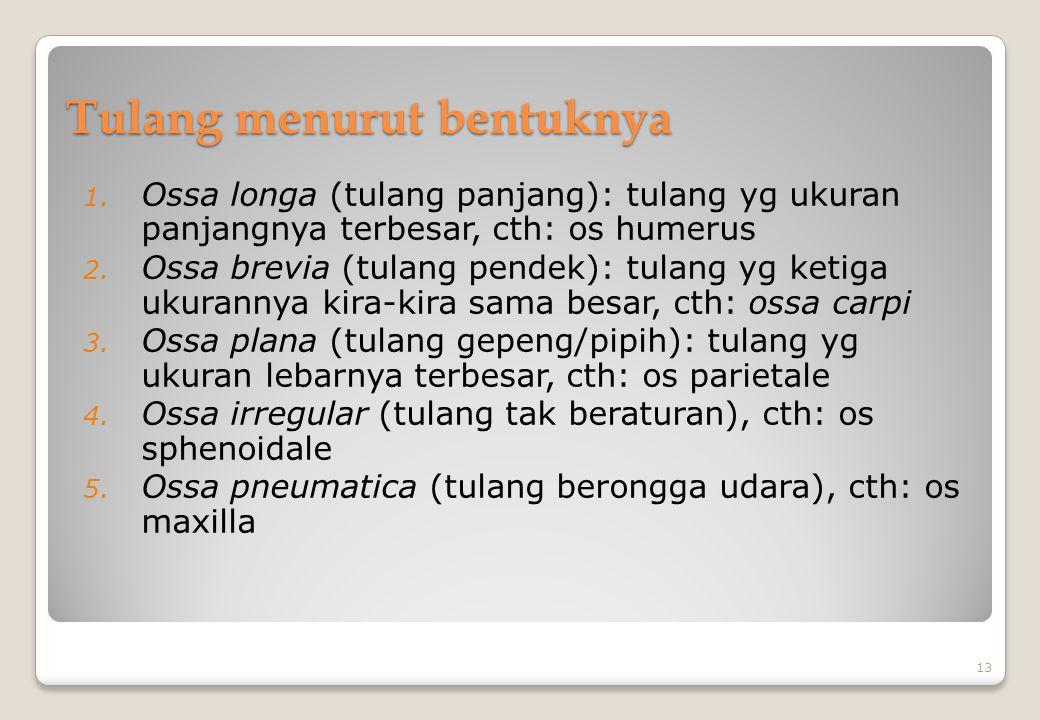 Tulang menurut bentuknya 1. Ossa longa (tulang panjang): tulang yg ukuran panjangnya terbesar, cth: os humerus 2. Ossa brevia (tulang pendek): tulang