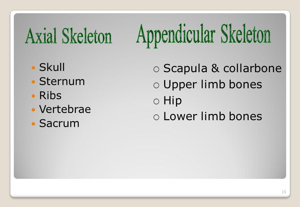 Skull Sternum Ribs Vertebrae Sacrum 15  Scapula & collarbone  Upper limb bones  Hip  Lower limb bones