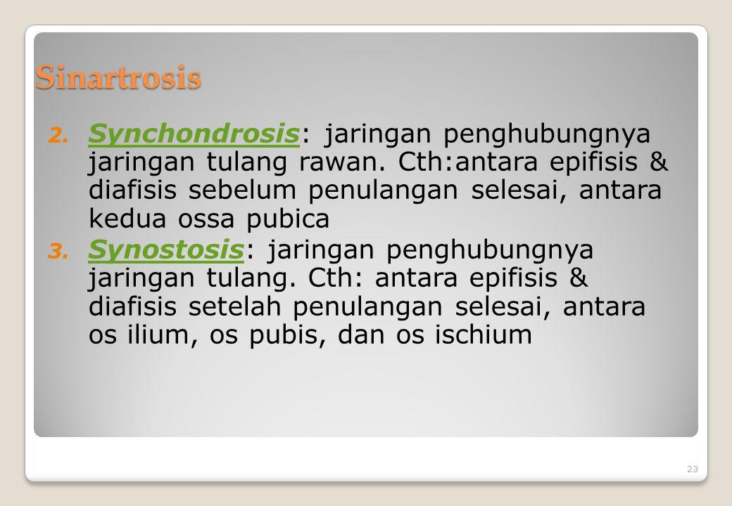 Sinartrosis 2. Synchondrosis: jaringan penghubungnya jaringan tulang rawan. Cth:antara epifisis & diafisis sebelum penulangan selesai, antara kedua os
