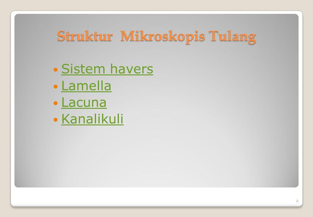 Struktur Mikroskopis Tulang Sistem havers Sistem havers Lamella Lamella Lacuna Lacuna Kanalikuli 9