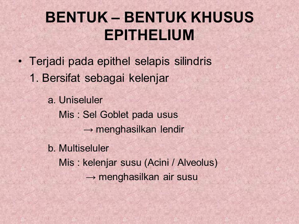 BENTUK – BENTUK KHUSUS EPITHELIUM Terjadi pada epithel selapis silindris 1.