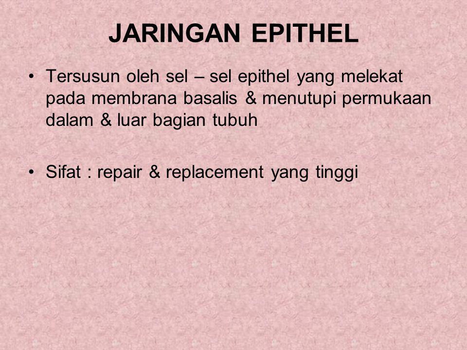 2.Epithel berpigmen Mis : Retina pada mata 3.