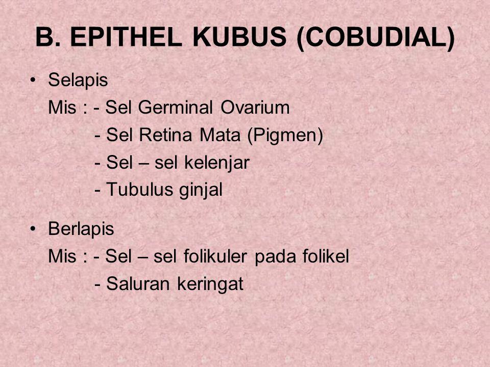 B. EPITHEL KUBUS (COBUDIAL) Selapis Mis : - Sel Germinal Ovarium - Sel Retina Mata (Pigmen) - Sel – sel kelenjar - Tubulus ginjal Berlapis Mis : - Sel