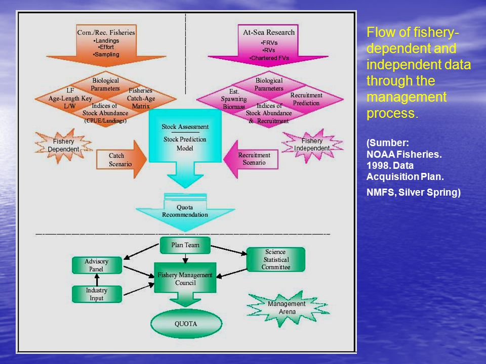 Flow of fishery- dependent and independent data through the management process. (Sumber: NOAA Fisheries. 1998. Data Acquisition Plan. NMFS, Silver Spr