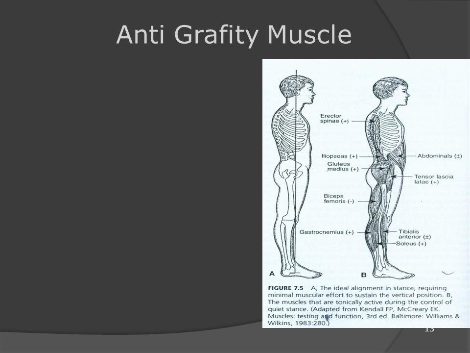Gravitasi Merupakan input Afferent yaitu berupa kekuatan konstan kearah bawah dimana kita harus selalu berinteraksi dengannya untuk dapat melakukan gerakan secara selektif.