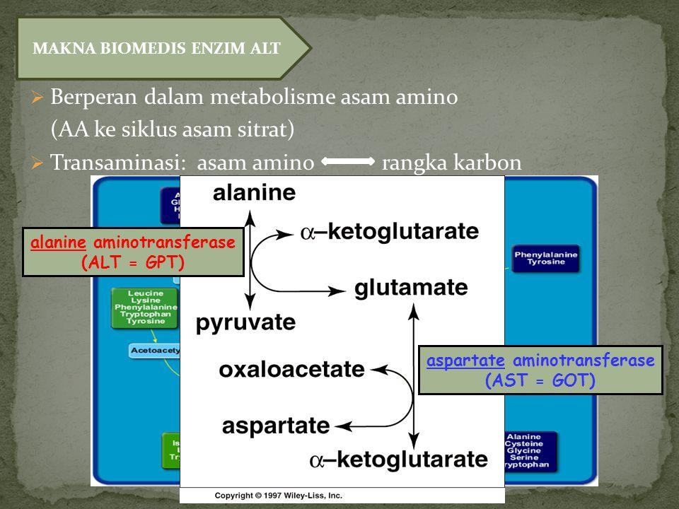  Berperan dalam metabolisme asam amino (AA ke siklus asam sitrat)  Transaminasi: asam amino rangka karbon MAKNA BIOMEDIS ENZIM ALT alanine aminotransferase (ALT = GPT) aspartate aminotransferase (AST = GOT)