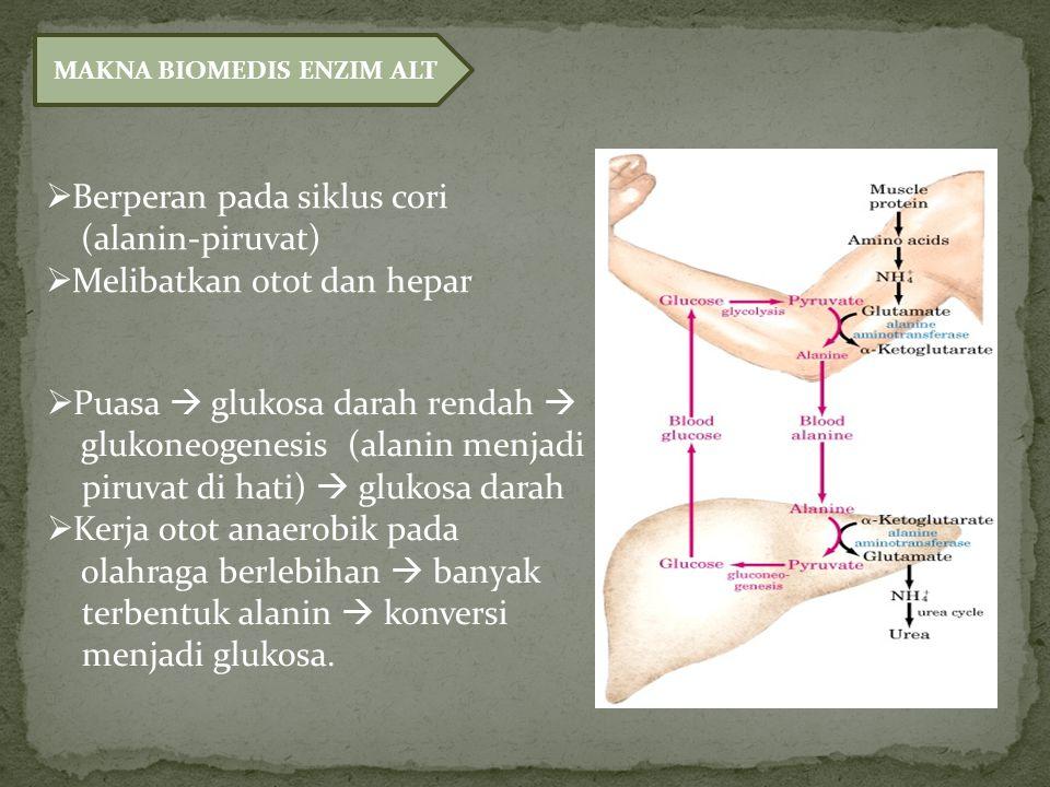 MAKNA BIOMEDIS ENZIM ALT  Berperan pada siklus cori (alanin-piruvat)  Melibatkan otot dan hepar  Puasa  glukosa darah rendah  glukoneogenesis (alanin menjadi piruvat di hati)  glukosa darah  Kerja otot anaerobik pada olahraga berlebihan  banyak terbentuk alanin  konversi menjadi glukosa.