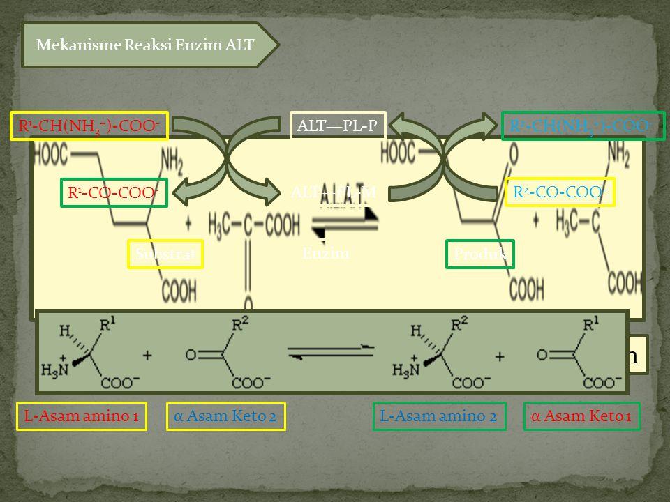 GlutamatPiruvatα Ketoglutarat Alanin R 1 -CH(NH 3 + )-COO - ALT—PL-P ALT—PL-MR 2 -CO-COO - R 1 -CO-COO - R 2 -CH(NH 3 + )-COO - Mekanisme Reaksi Enzim ALT L-Asam amino 1α Asam Keto 2L-Asam amino 2α Asam Keto 1 ProdukSubstrat Enzim