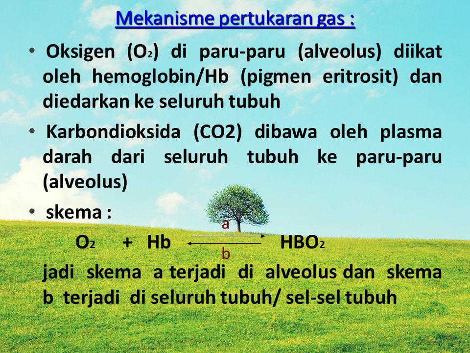 Mekanisme pertukaran gas : Mekanisme pertukaran gas : Oksigen (O 2 ) di paru-paru (alveolus) diikat oleh hemoglobin/Hb (pigmen eritrosit) dan diedarka