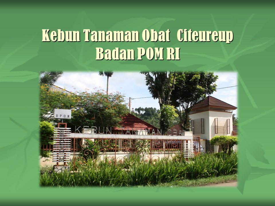 Fungsi KTO Citeureup Etalase tanaman obat Indonesia, seperti tanaman obat langka dan /atau tanaman obat yang telah dilakukan penelitian secara ilmiah dan terbukti khasiatnya.
