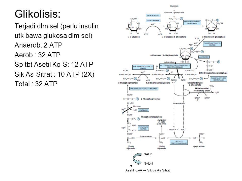 Glikolisis: Terjadi dlm sel (perlu insulin utk bawa glukosa dlm sel) Anaerob: 2 ATP Aerob : 32 ATP Sp tbt Asetil Ko-S: 12 ATP Sik As-Sitrat : 10 ATP (