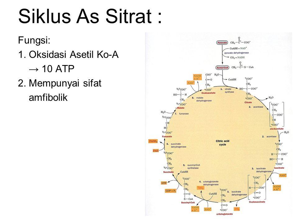Siklus As Sitrat : Fungsi: 1. Oksidasi Asetil Ko-A → 10 ATP 2. Mempunyai sifat amfibolik