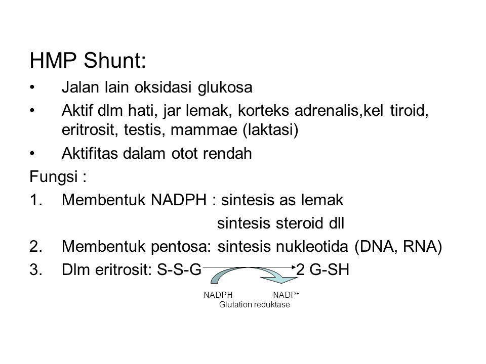HMP Shunt: Jalan lain oksidasi glukosa Aktif dlm hati, jar lemak, korteks adrenalis,kel tiroid, eritrosit, testis, mammae (laktasi) Aktifitas dalam ot
