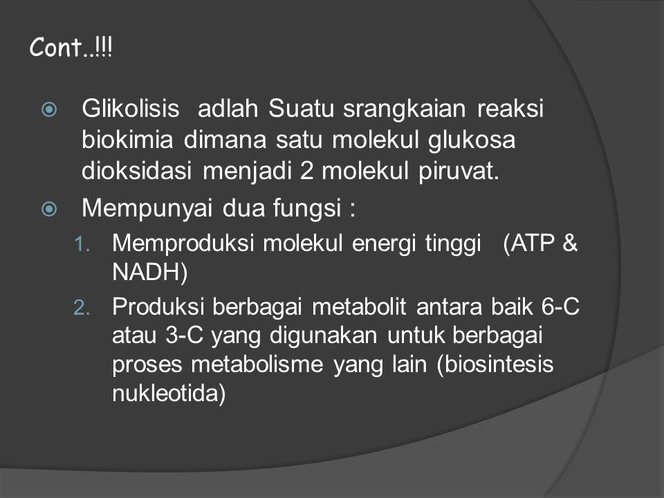  Glikolisis adlah Suatu srangkaian reaksi biokimia dimana satu molekul glukosa dioksidasi menjadi 2 molekul piruvat.  Mempunyai dua fungsi : 1. Memp
