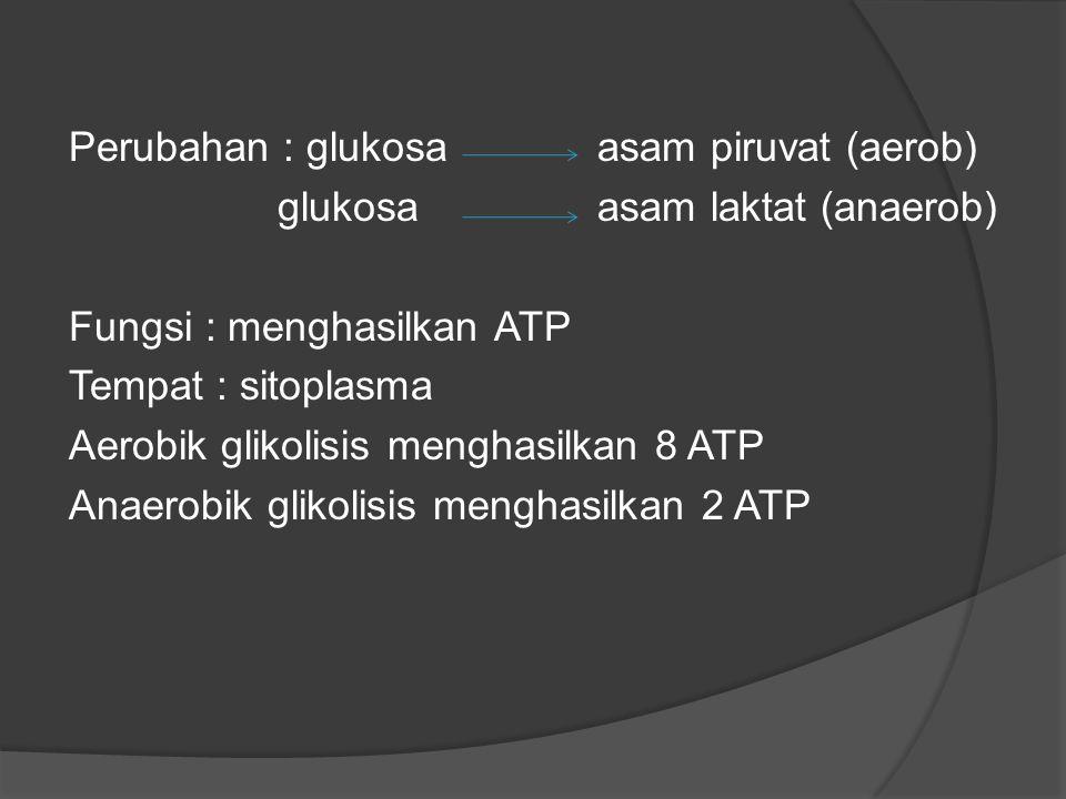 Perubahan : glukosaasam piruvat (aerob) glukosaasam laktat (anaerob) Fungsi : menghasilkan ATP Tempat : sitoplasma Aerobik glikolisis menghasilkan 8 A