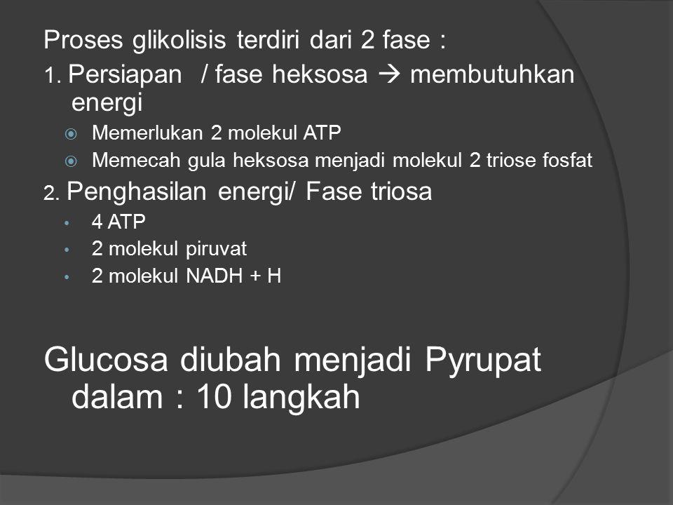 Proses glikolisis terdiri dari 2 fase : 1. Persiapan / fase heksosa  membutuhkan energi  Memerlukan 2 molekul ATP  Memecah gula heksosa menjadi mol