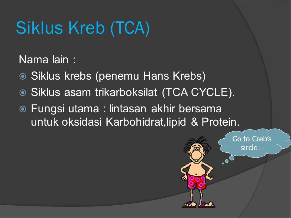 Siklus Kreb (TCA) Nama lain :  Siklus krebs (penemu Hans Krebs)  Siklus asam trikarboksilat (TCA CYCLE).  Fungsi utama : lintasan akhir bersama unt