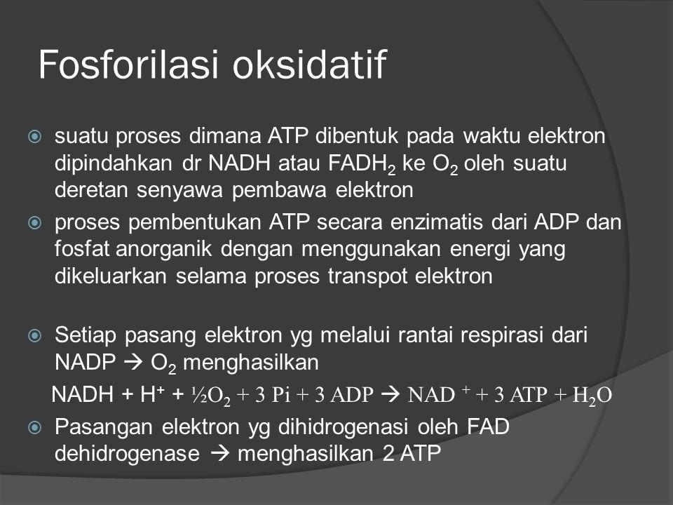 Fosforilasi oksidatif  suatu proses dimana ATP dibentuk pada waktu elektron dipindahkan dr NADH atau FADH 2 ke O 2 oleh suatu deretan senyawa pembawa