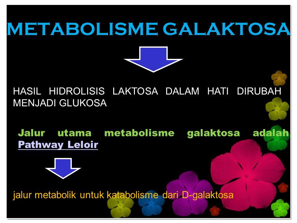 METABOLISME GALAKTOSA HASIL HIDROLISIS LAKTOSA DALAM HATI DIRUBAH MENJADI GLUKOSA Jalur utama metabolisme galaktosa adalah Pathway Leloir Pathway Lelo