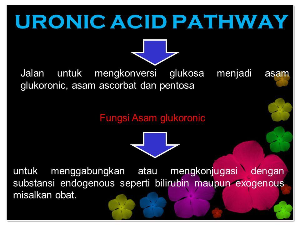 URONIC ACID PATHWAY Jalan untuk mengkonversi glukosa menjadi asam glukoronic, asam ascorbat dan pentosa Fungsi Asam glukoronic untuk menggabungkan ata