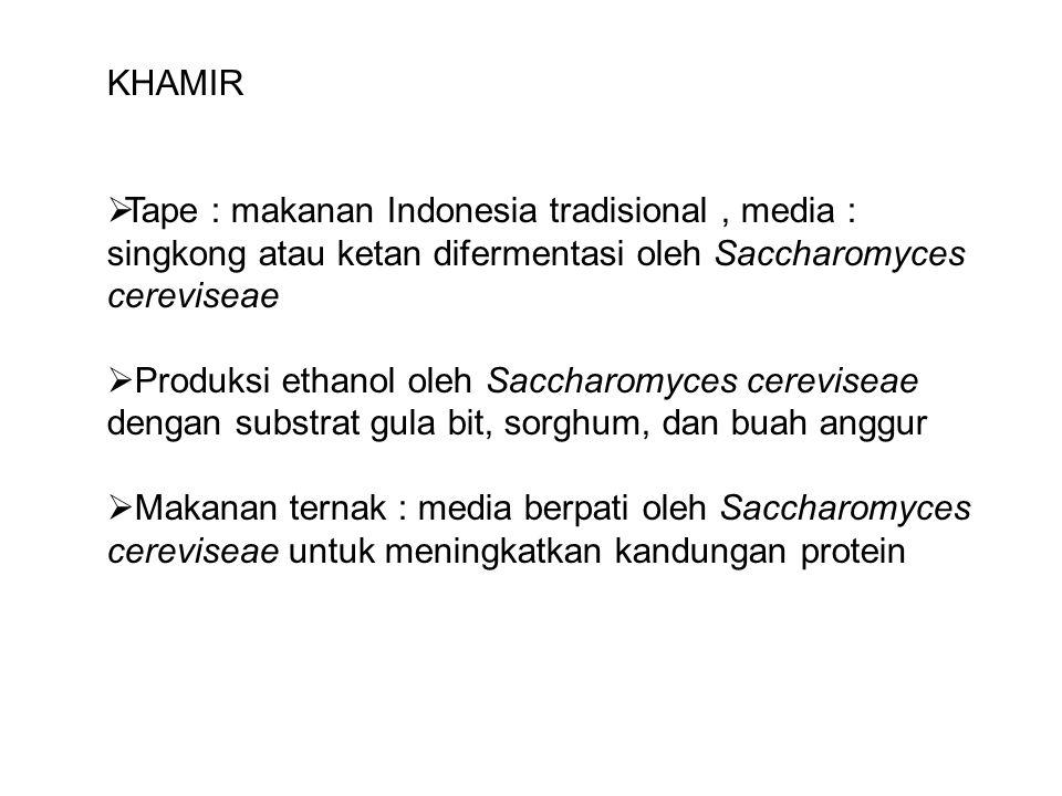 KHAMIR  Tape : makanan Indonesia tradisional, media : singkong atau ketan difermentasi oleh Saccharomyces cereviseae  Produksi ethanol oleh Saccharo