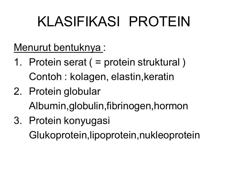 KLASIFIKASI PROTEIN Menurut bentuknya : 1.Protein serat ( = protein struktural ) Contoh : kolagen, elastin,keratin 2.Protein globular Albumin,globulin