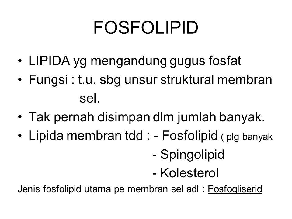FOSFOLIPID LIPIDA yg mengandung gugus fosfat Fungsi : t.u. sbg unsur struktural membran sel. Tak pernah disimpan dlm jumlah banyak. Lipida membran tdd