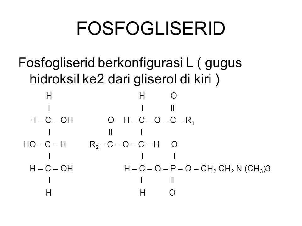 FOSFOGLISERID Fosfogliserid berkonfigurasi L ( gugus hidroksil ke2 dari gliserol di kiri ) HH O l l ll H – C – OH O H – C – O – C – R 1 lll l HO – C –