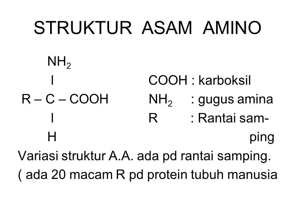STRUKTUR ASAM AMINO NH 2 l COOH : karboksil R – C – COOH NH 2 : gugus amina l R : Rantai sam- H ping Variasi struktur A.A. ada pd rantai samping. ( ad