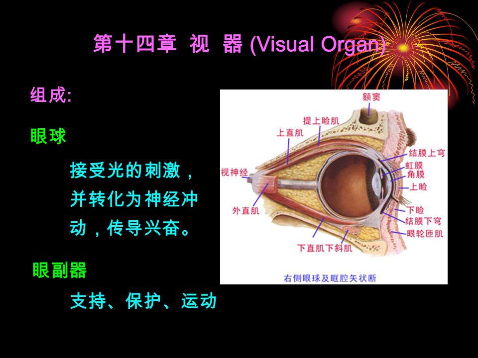 组成 : 第十四章 视 器 (Visual Organ) 眼球 眼副器 接受光的刺激, 并转化为神经冲 动,传导兴奋。 支持、保护、运动