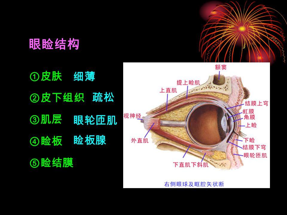 眼睑结构 ①皮肤 ②皮下组织 眼轮匝肌 ④睑板 ⑤睑结膜 睑板腺 细薄 疏松 ③肌层