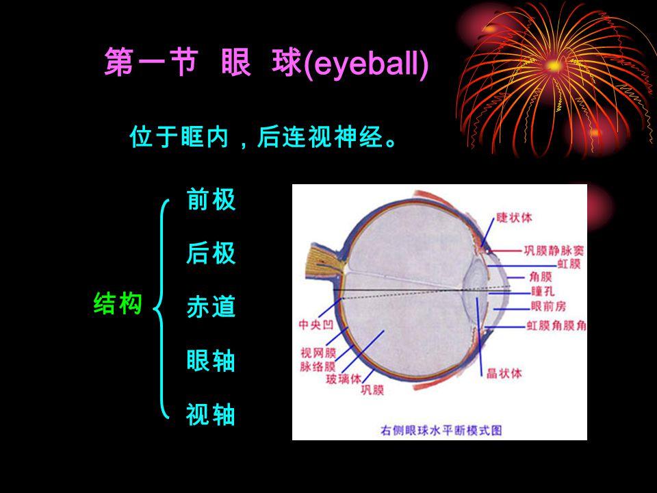 第一节 眼 球 (eyeball) 前极 后极 赤道 眼轴 视轴 位于眶内,后连视神经。 结构