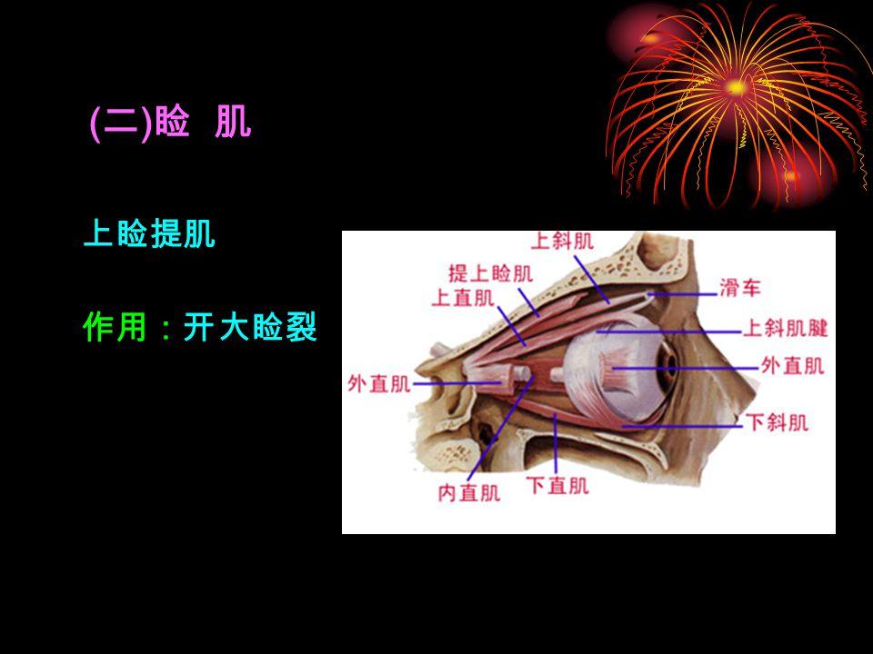 ( 二 ) 睑 肌 上睑提肌 作用:开大睑裂