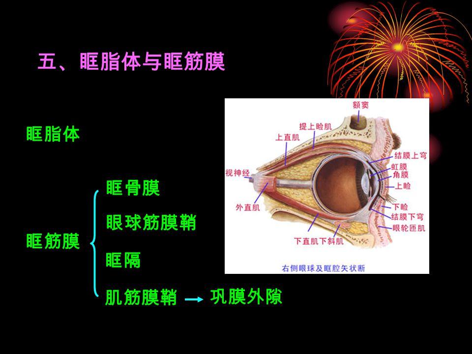 五、眶脂体与眶筋膜 眶脂体 眼球筋膜鞘 巩膜外隙 眶筋膜 眶骨膜 肌筋膜鞘 眶隔