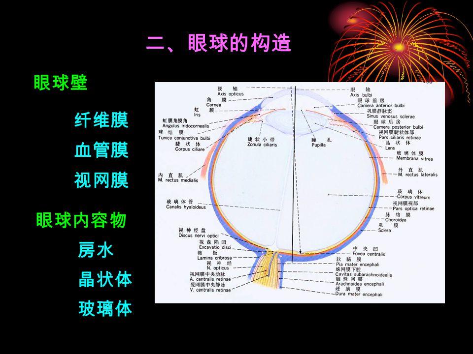 二、眼球的构造 眼球壁 眼球内容物 纤维膜 血管膜 视网膜 房水 晶状体 玻璃体