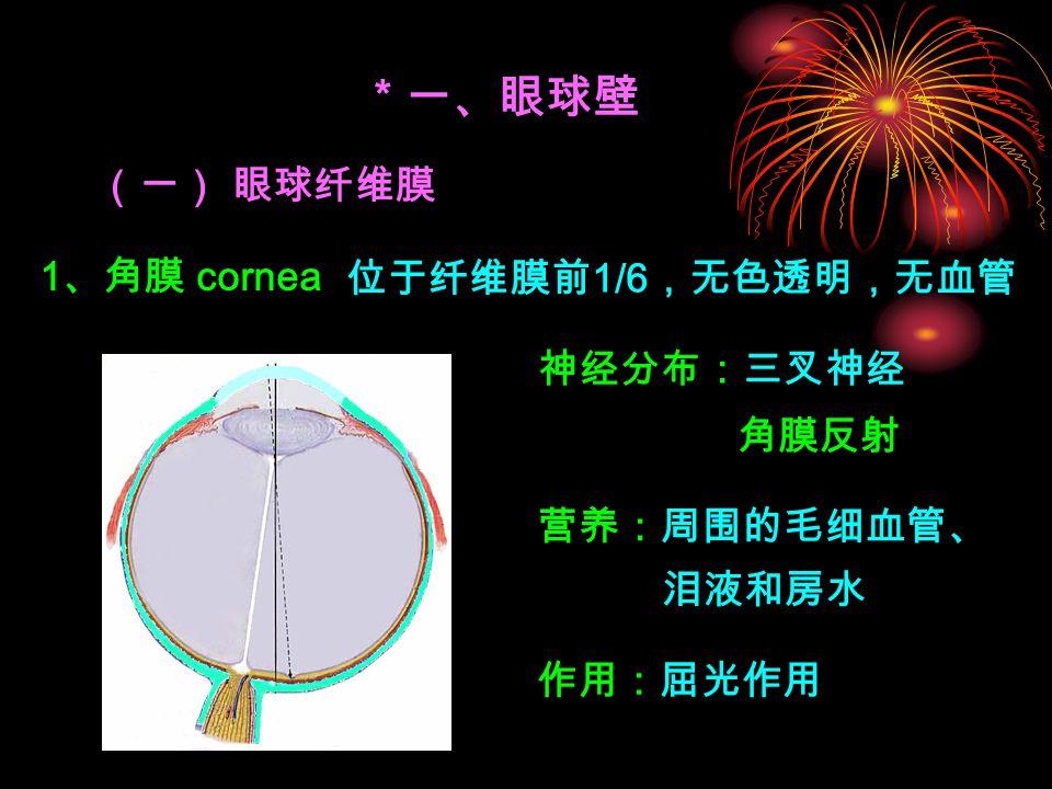 角膜反射 * 一、眼球壁 (一) 眼球纤维膜 1 、角膜 cornea 作用:屈光作用 位于纤维膜前 1/6 ,无色透明,无血管 神经分布:三叉神经 营养:周围的毛细血管、 泪液和房水