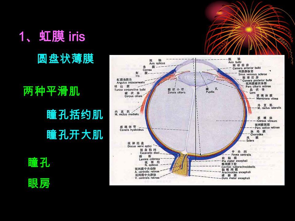 1 、虹膜 iris 瞳孔 两种平滑肌 瞳孔括约肌 瞳孔开大肌 圆盘状薄膜 眼房