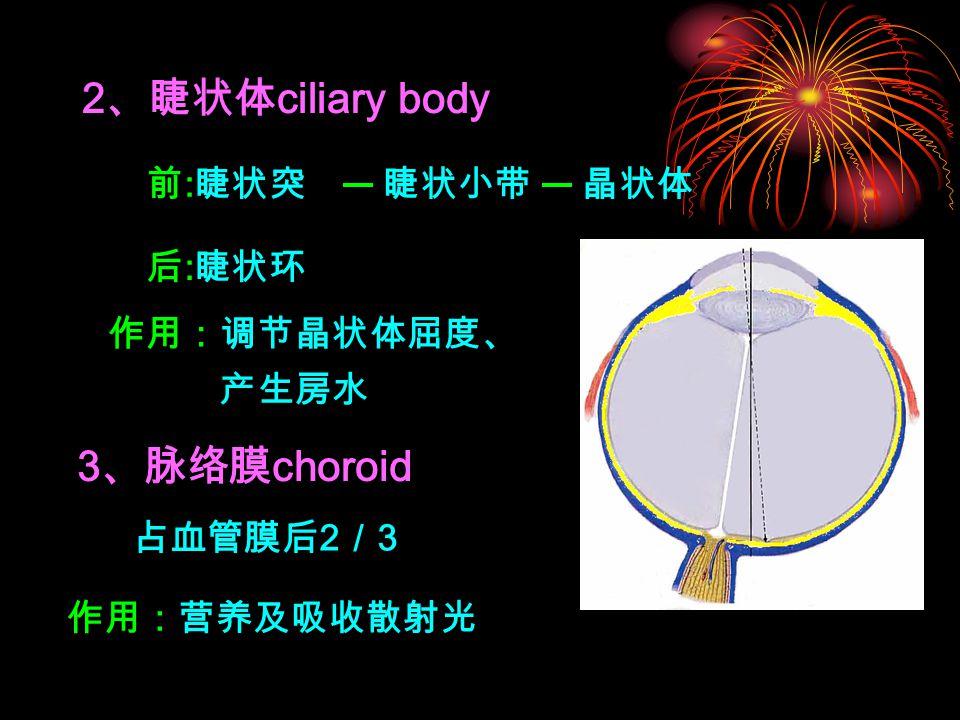 2 、睫状体 ciliary body 3 、脉络膜 choroid 前 : 睫状突 后 : 睫状环 睫状小带晶状体 作用:调节晶状体屈度、 产生房水 占血管膜后 2 / 3 作用:营养及吸收散射光