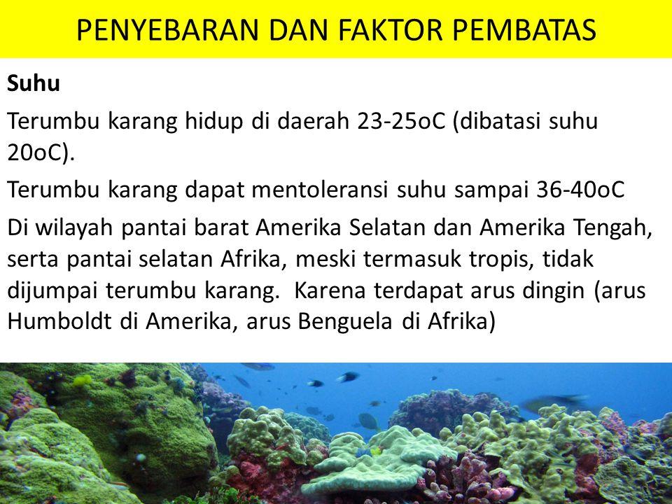 PENYEBARAN DAN FAKTOR PEMBATAS Suhu Terumbu karang hidup di daerah 23-25oC (dibatasi suhu 20oC). Terumbu karang dapat mentoleransi suhu sampai 36-40oC
