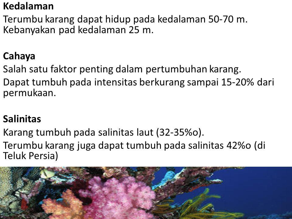 Kedalaman Terumbu karang dapat hidup pada kedalaman 50-70 m. Kebanyakan pad kedalaman 25 m. Cahaya Salah satu faktor penting dalam pertumbuhan karang.